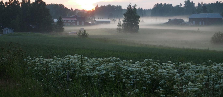 Usva_nousee_Keikkala-Sittalan_peltoaukealla